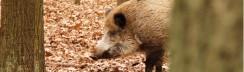 wildgehege-berlin-tiergehege-wildschwein